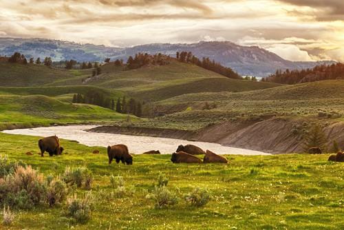 Find Your Herd Blog